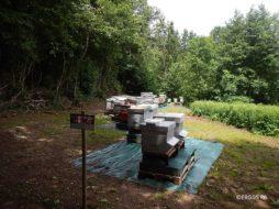 Apiculture : déclaration des ruches 2018